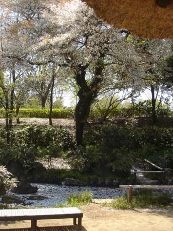 2009.04.11 桜