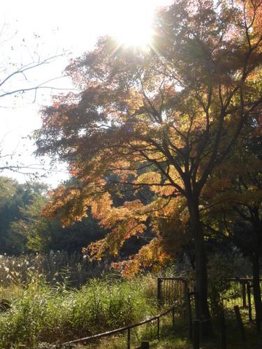 2009.11.21 鴨池公園の紅葉 2.JPG